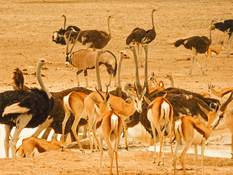 Animals at the waterhole